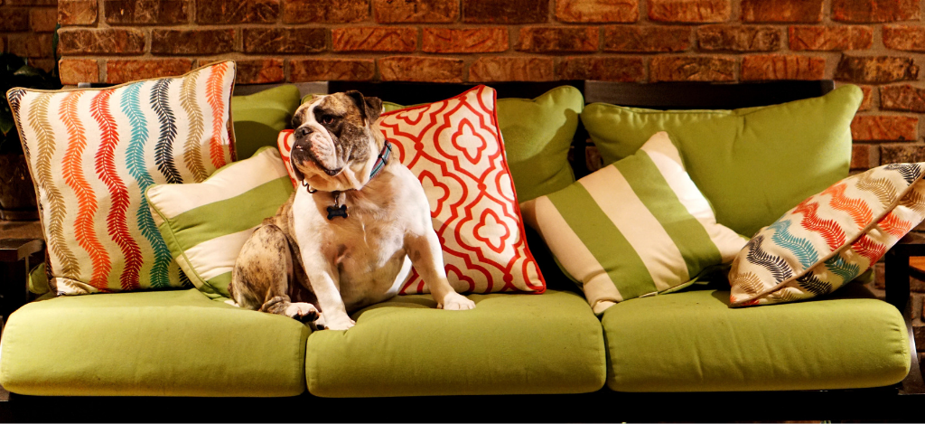 Green sofa with dog - how to make your sofa last longer